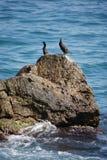Une paire d'oiseaux de la Mer Noire sur une roche qui est lavée par la mer ondule Image stock