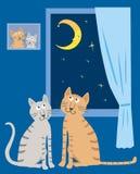 Une paire de chats domestiques dans leur maison pendant la nuit étoilée Photographie stock