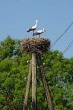 Une paire de cigognes dans un nid sur un poteau Photo stock