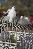 Une paire de colombes Photographie stock libre de droits