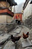 Une paire de poulets sur la rue photos stock