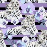 Une paire de tigres et de fleurs blancs Photographie stock