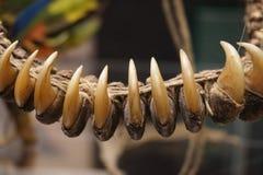 Une partie d'animaux un bracelet intéressant Image stock