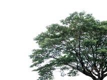 Une partie d'arbre avec les feuilles vertes image stock