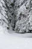 Une partie d'arbre conifére grand au centre de la photo et des beaucoup de neige photos stock