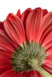 Une partie d'une belle fleur rouge Image libre de droits