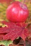 Une partie d'une lame d'érable d'automne Photos stock