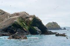 Une partie d'une réserve d'oiseaux à sept îles Images libres de droits