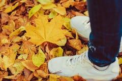 Une partie de concept d'automne de personnes de corps Jambes sexy en parc La femme a des blues-jean Images stock
