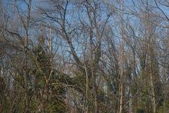 Une partie de forêt avec le vert laisse les arbres et le ciel bleu Photographie stock libre de droits