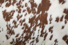 Une partie de peau de vache rouge et blanche Photos stock
