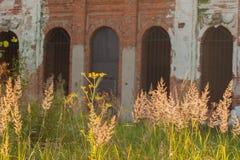 Une partie de vieille façade ruinée et d'herbe lumineuse Images stock