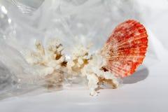 Une partie du récif et de la coquille à l'arrière-plan blanc, texture image libre de droits