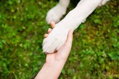Une patte d'un chien dans une main Image stock