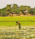 Une personne pêche avec beaucoup photos libres de droits