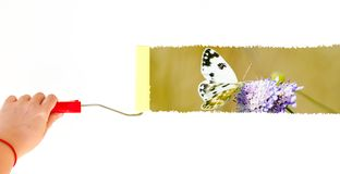 Une personne peignant un papillon sur une fleur sur un mur blanc avec une brosse de rouleau Photographie stock
