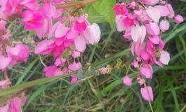 Une petite abeille en mer rose Photographie stock libre de droits