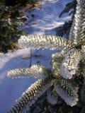 Une petite branche impeccable congelée Photos stock