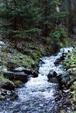 Une petite cascade à écriture ligne par ligne Rivière de montagne dans les Carpathiens Image libre de droits