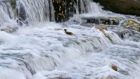 Une petite cascade en parc d'automne banque de vidéos