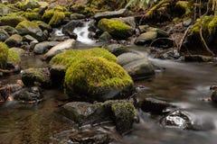 Une petite cascade en parc national olympique, cascades des Etats-Unis par des roches couvertes dans la mousse photo stock