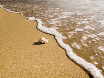 Une petite coquille d'océan Images stock