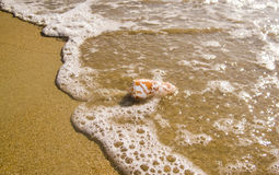 Une petite coquille d'océan s'est noyée par une vague Images stock