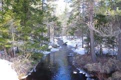 Une petite crique fonctionne par une forêt photographie stock libre de droits