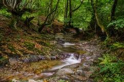 Une petite crique qui fonctionne par une vallée large complètement des feuilles tombées, des fougères et des beaux arbres tordus Image stock