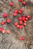Une petite culture des fraisiers communs sur la vue supérieure de vieux tronçon en bois images stock