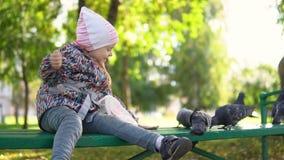 Une petite fille alimente des pigeons en parc d'automne clips vidéos