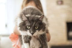 Une petite fille et un chat velu Photo de cru Copiez l'espace Image libre de droits