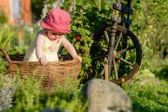 Une petite fille mignonne s'assied sur un foin dans un panier dans le jardin Image stock