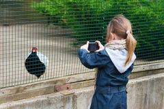 Une petite fille a photographié le faisan. Photo stock