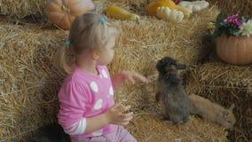 Une petite fille s'asseyant sur une paille joue avec les lapins vivants banque de vidéos