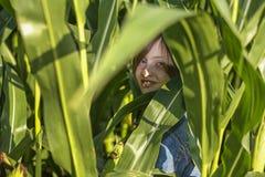 Une petite fille se cache dans le domaine de maïs photographie stock