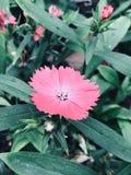 Une petite fleur Images libres de droits