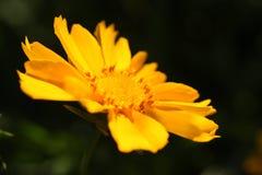 Une petite fleur Photos libres de droits