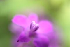 Une petite fleur Photos stock