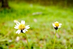 Une petite fleur d'herbe dans le domaine Image stock