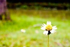 Une petite fleur d'herbe dans le domaine Images stock