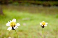 Une petite fleur d'herbe dans le domaine Photo libre de droits