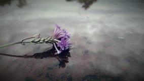 Une petite fleur posant dans l'eau le jour gris Photos libres de droits