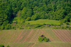 Une petite maison de ferme entourée par des vignobles photo libre de droits