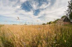 Une petite maison rurale au bord d'un champ de blé Un cosiness simple de la vie à la campagne Photographie stock libre de droits