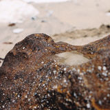 Une petite mer capturée au bas tid Images stock