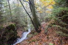 Une petite rivière dans un paysage d'automne Photographie stock libre de droits