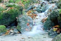 Une petite rivière dans une forêt Photographie stock libre de droits