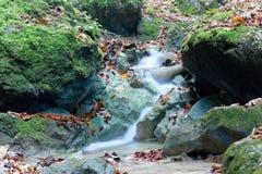 Une petite rivière dans une forêt Images stock