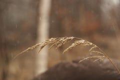 Une peu de neige Photo libre de droits